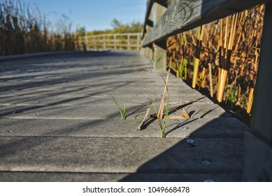 Closeup view of a walkway with several blades of grass sticking out.