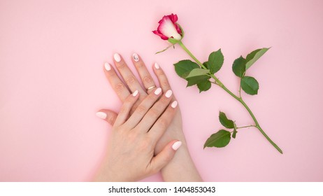 Closeup view of woman hand with rose at pink table
