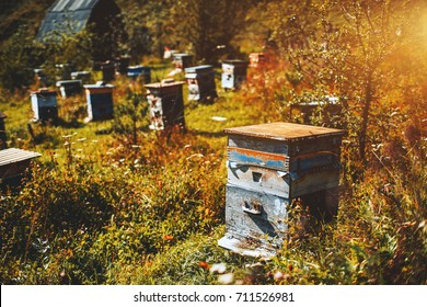 Close-up view of wooden bee-hive unit standing on autumn grassland of Altai mountains with wildflowers and native grasses around, multiple hives in defocused background, Chemal district, Russia