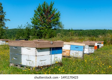 A closeup view of wooden beehives scattered haphazardly in a field. Bees can be seen at the entrance to the hive at the bottom. Black dots in the air are flying bees. Bright sunny day.