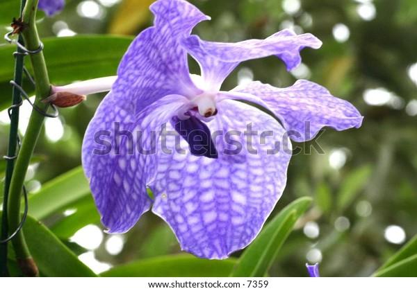 close-up of violet-coloured flower