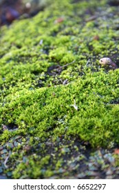 Close-up of vivid green moss