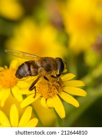 closeup of a wasp resting on a yellow flower