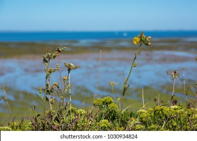 Closeup of weeds and flowers with the blurred ocean as a backdrop.