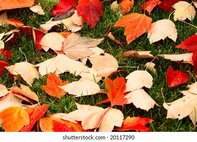 Close-up of wet autumn leaves on short green grass
