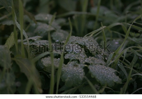 Close-up of wet foliage and grass.