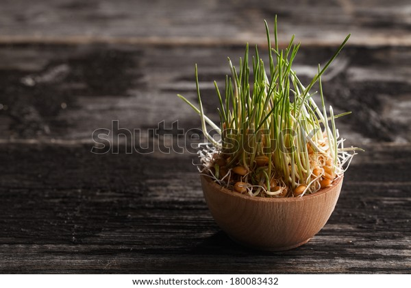 Close-up of Wheat Grass Sprouts in a Wooden bowl