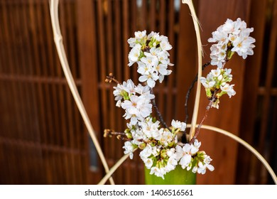 Closeup of white cherry blossom flowers ikebana decoration in Japan in spring with green leaves and vase by wooden door