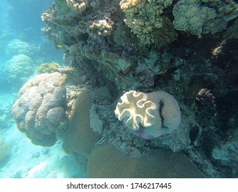 Close-up of white coral on a rock in the great barrier reef in Australia taken with an underwater camera