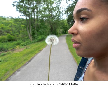 A closeup of a white dandelion that has gone to seed with a beautiful young mixed race African American woman breathing in about to blow the seeds into the wind along a pedestrian path in a forest.