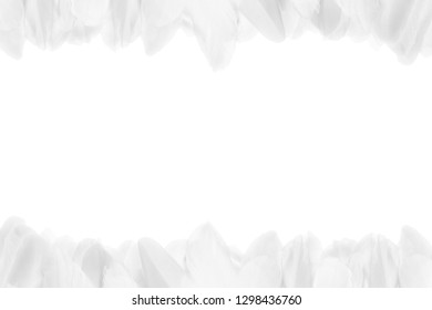 Close-up of white feathers at the top and bottom of the photo. Horizontal frame. Isolated on white background