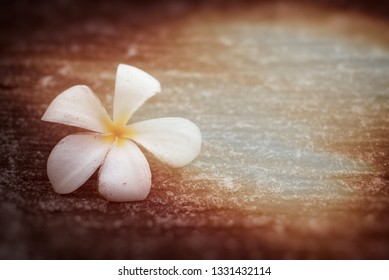 close-up of  White Frangipani flowers on the floor