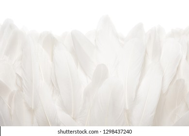 Close-up of white goose feathers isolated on white background