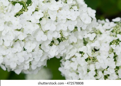 white lilac blossom spring stock photo edit now 167677364