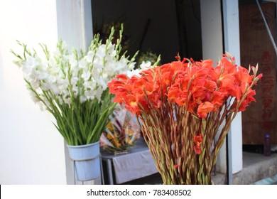 closeup of white and orange gladiolus flowers