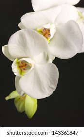 Close-up of white orchids on black background.