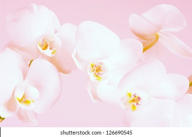 Close-up of white orchids on light background. Toned image.