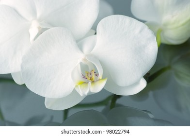 Close-up of white orchids with reflection..