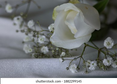 Close-up of a white rose with gypsophilia on a white surface. Landscape orientation, limited depth of field, negative space