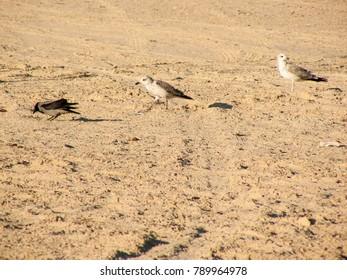 closeup of the wildlife from the red sea in Sinai Egypt