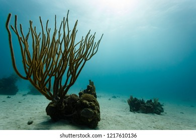 Closeup of willowy branching coral growing on side of small colony of the coral reef