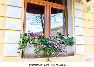 Closeup of window closed yellow color and pink purple flower basket decorations on sunny summer day architecture in Kyiv, Ukraine