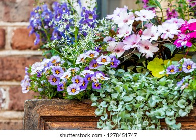 Closeup of window purple blue color and pink flower basket box decorations on sunny summer day with brick architecture in Charleston, South Carolina