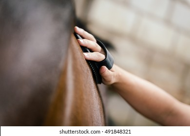 closeup, woman is currying a brown horse, equestrian farm