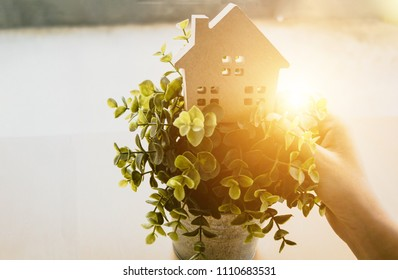 Closeup woman hand holding house model on green grass flowerpot with happiness, warm light. Eco friendly environment house development concept.