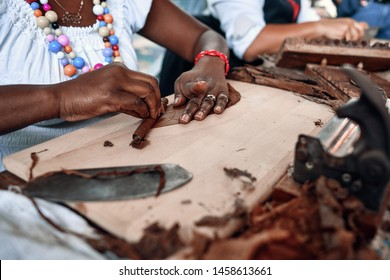 Closeup of woman hands making cigar from tobacco leaves. Traditional manufacture of cigars.Demonstration of production of handmade cigars. Hands rolling dried and cured tobacco leaves.