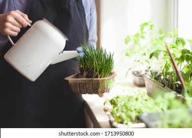 Close-up of woman hands take care, watering plants at home. Watering and caring for indoor plants. . Gardening. Care of home plants