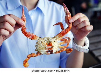 Closeup woman holding the claws of a blue crab or steamed blue swimming crab