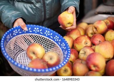 Close-up of Woman's hand choosing fresh apples and collecting in basket for buying at market.