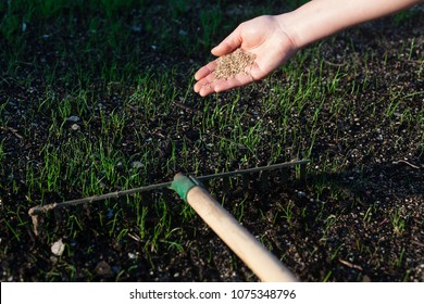 Close-up of a woman's hand shaking grass seeds. (Shallow DOF)