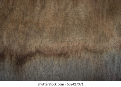 Closeup of Wood texture