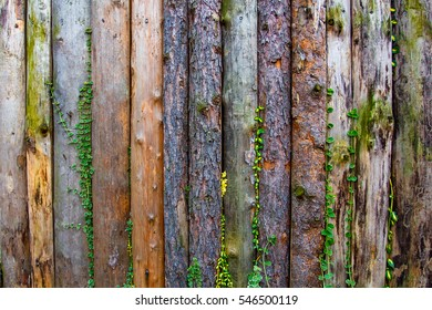 closeup of wooden fence with green vegetation