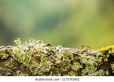 Close-up of a wooden fence overgrown with moss and lichen