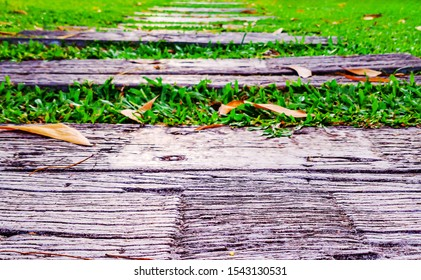 Closeup of wooden pathway in the green grass. Wood path through green grass in a garden. Beautiful Pathway walk road nature old wooden stares. The way to success and milestone concept.