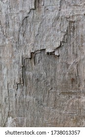 Close-up of wooden surface of a split tree