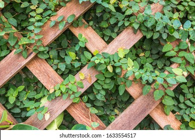 Closeup of wooden trellis with plant