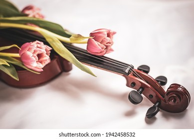 Close-up of wooden violin covered with fresh spring tulips bouquet. Detailed picture of musical instrument, romantic studio decoration. Concept of art, music, antique - Shutterstock ID 1942458532