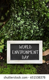 closeup of a wooden-framed chalkboard with the text world environment day in the trunk of a tree in the forest