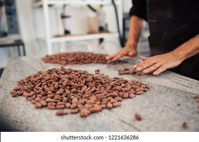 Closeup of a worker sorting cocao beans for production by hand while standing at a table in an artisanal chocolate making factory