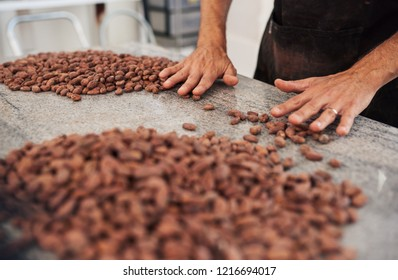 Closeup of a worker standing at a table in an artisanal chocolate making factory sorting cocao beans for production by hand