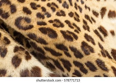 Closeup wrinkle leopard skin for background