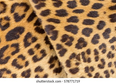 Closeup wrinkle leopard skin for background use