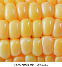 The closeup of yellow corn isolated on white background