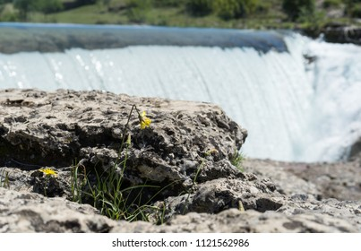 Closeup of a yellow flower in front of a waterfall in Montenegro