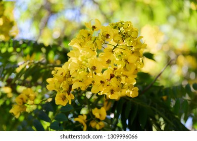 Close-up of yellow flower on a tree