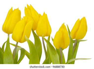 Close-up of yellow isolated tulips